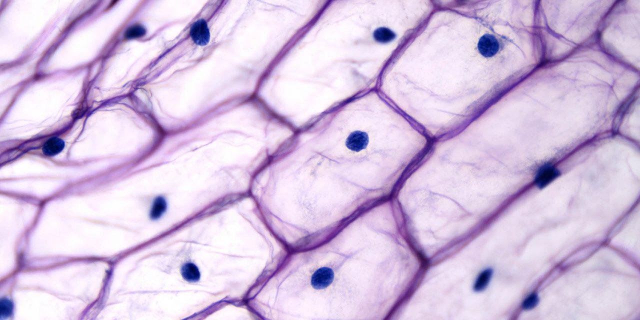 Hospitex-Cytofast - The world of Cytology