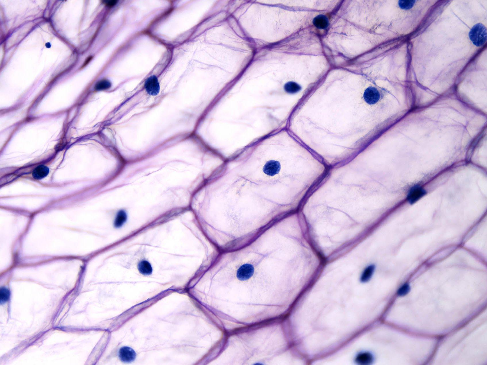 https://www.hospitex.com/wp-content/uploads/2019/09/Hospitex-Cytofast-3-–-il-mondo-della-citologia-e1596019226917.jpg